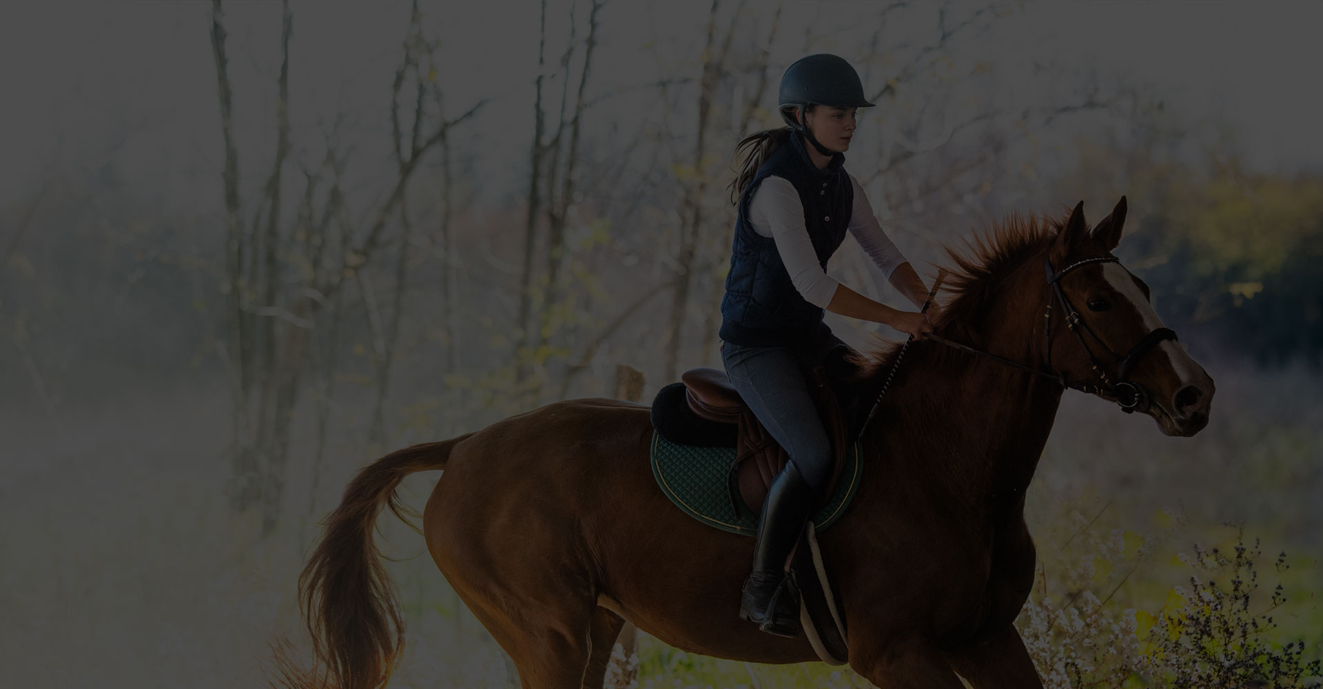Everything about horse-riding
